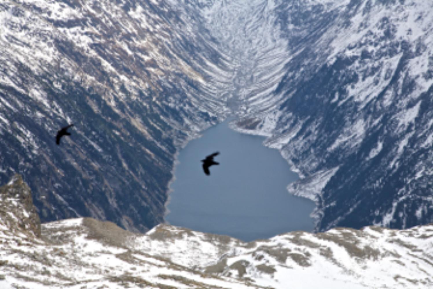 An Alpine Glide