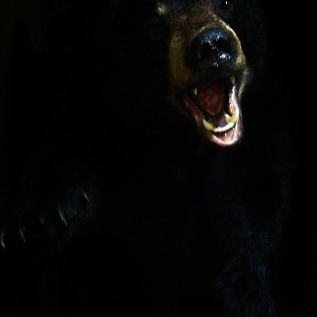 #taxidermy #hunting #outdoorsman #blackbears#