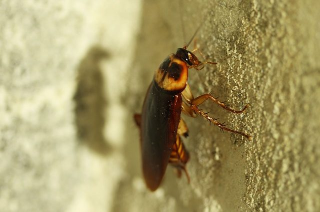 Cockroach-Milk-Its-The-New-Superfood-Thats-High-In-Protein-But-Will-You-Try-It2-e1527825246340.jpg