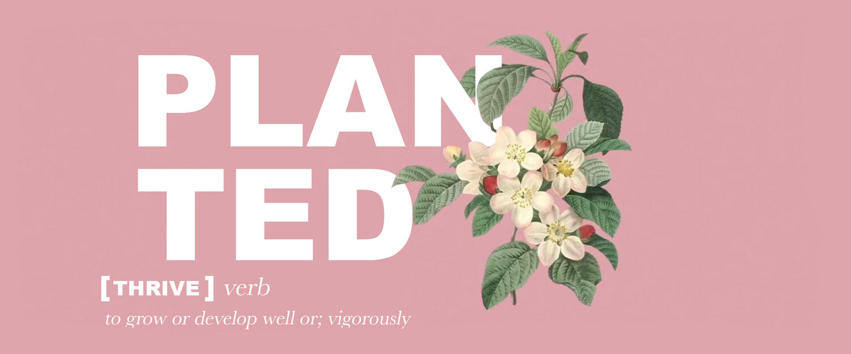 planted.jpg