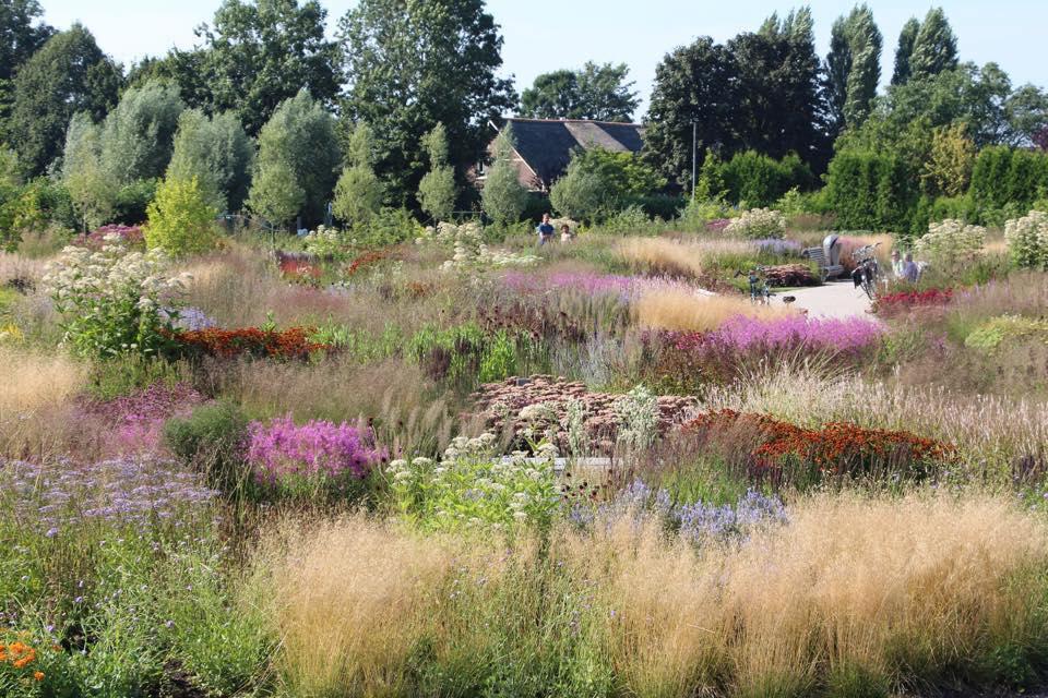 garden by Oudolf.jpg
