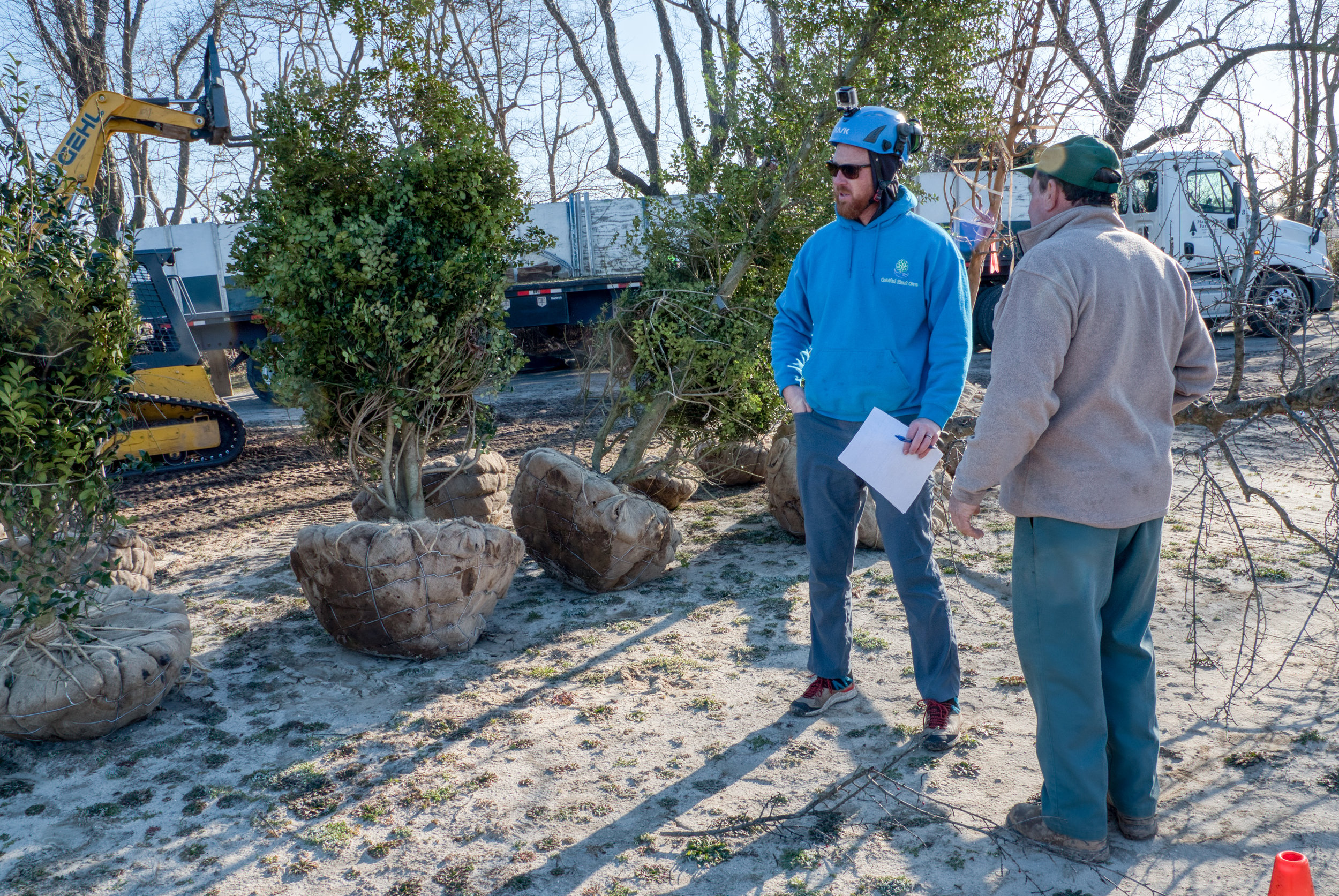 Jeremy Hager, ISA board-certified Master Arborist, and Randy Childress of Delta Nursery discuss holly tree placement at DBG