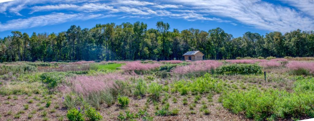 Pink muhly grasses grow in DBG's Piet Oudolf Meadow Garden