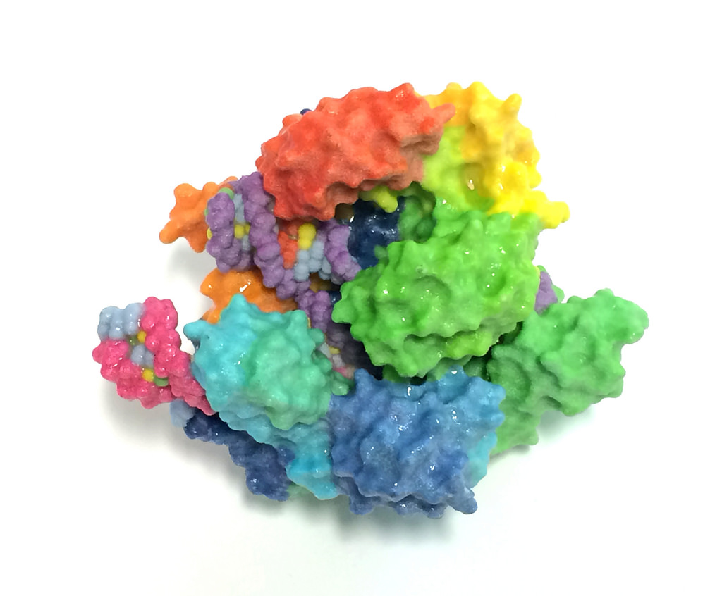 The structure of Cas9, from the National Institutes of Health (NIH).