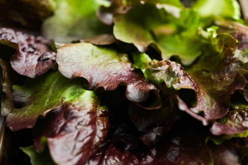 lettuce AM.jpg