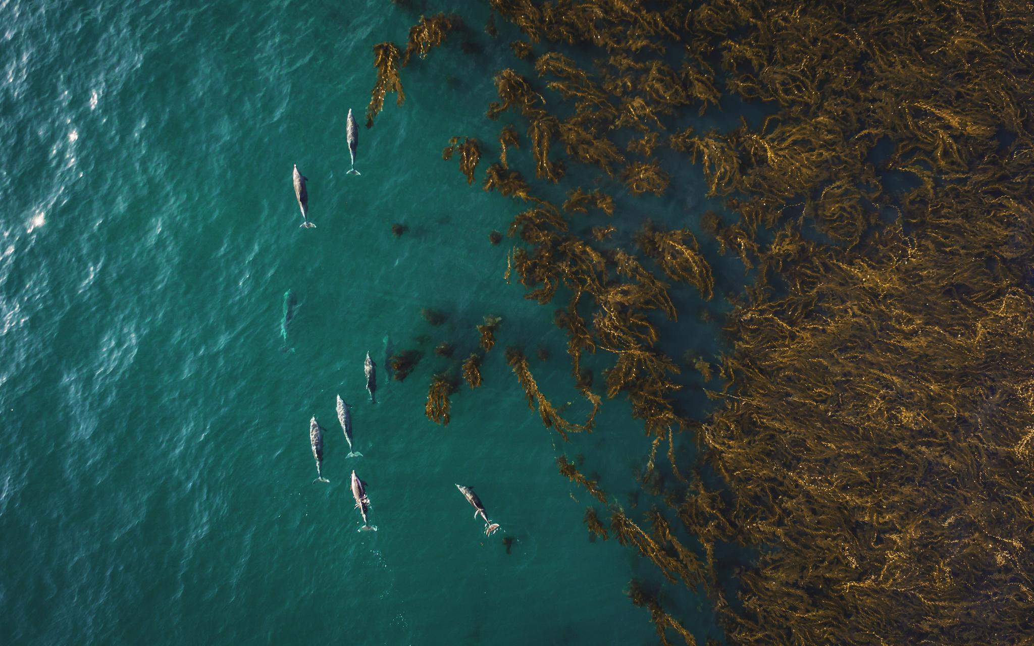 Kelp Nomads 3