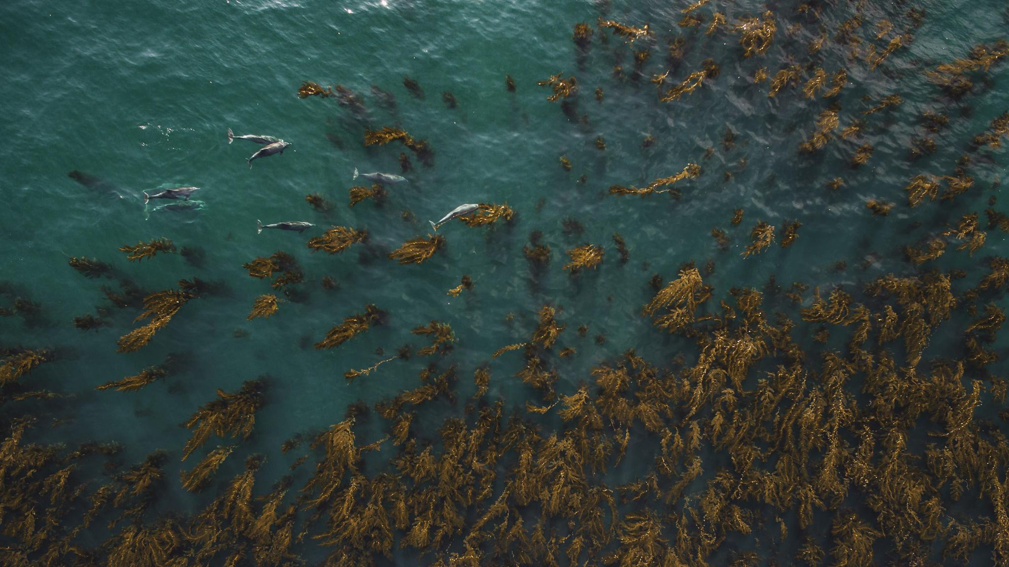Kelp Nomads 4
