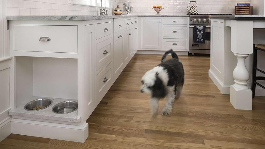 Dog Cabinets.jpg