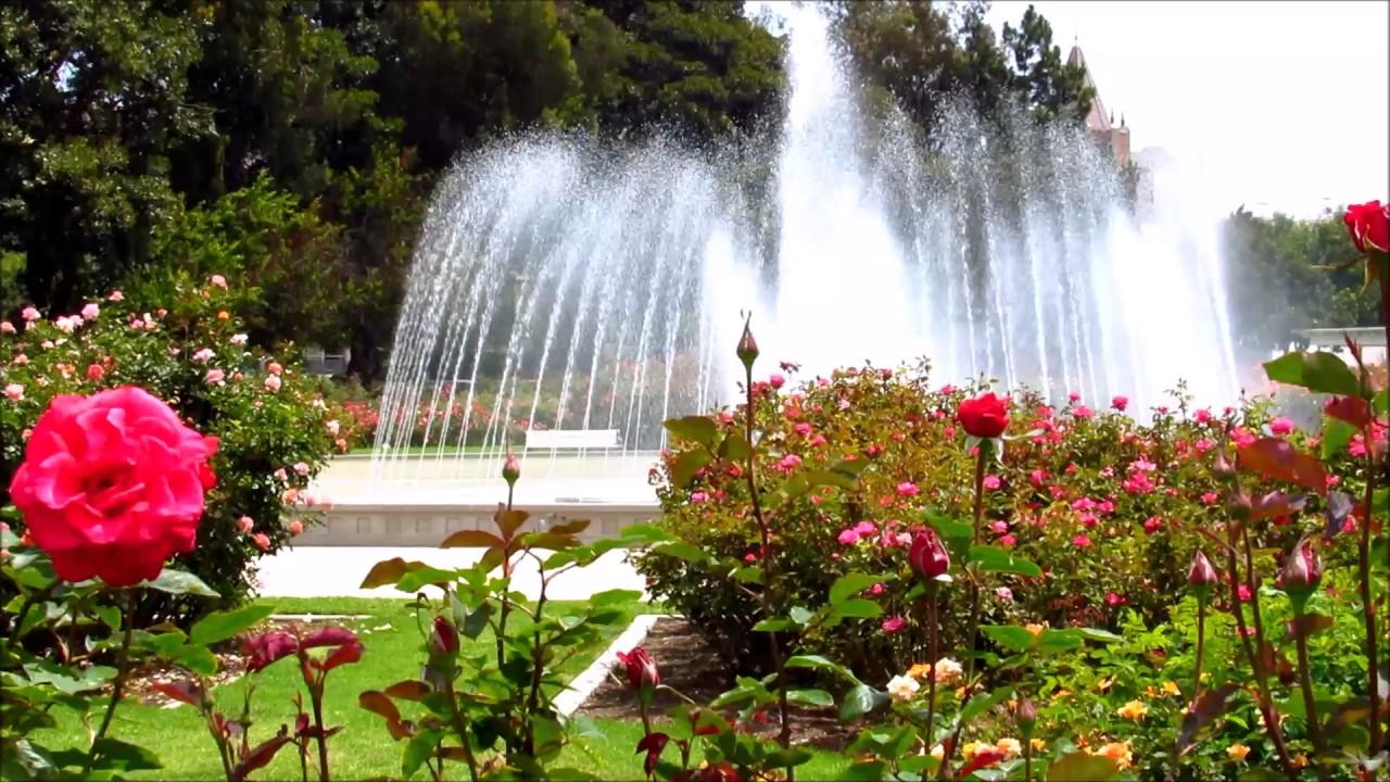 Expo Rose Garden.jpg