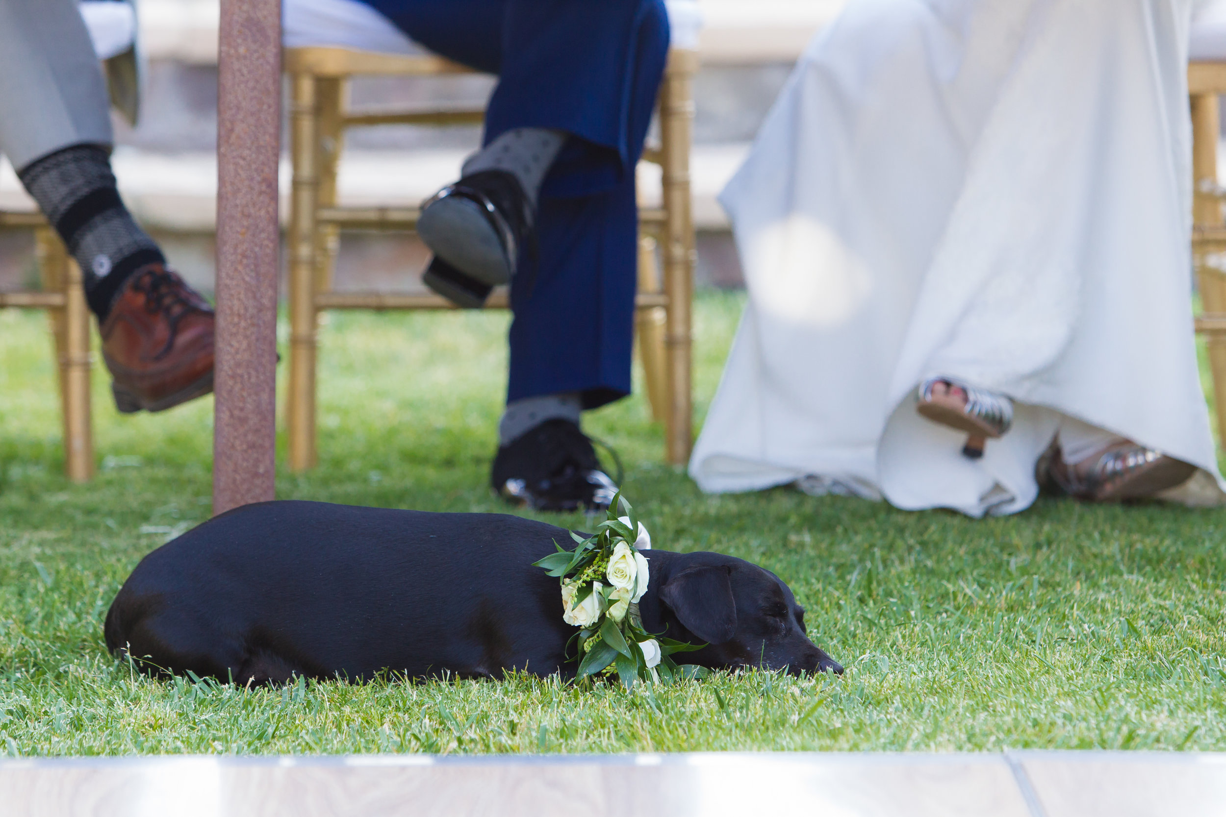 Wedding - Kerry & Steve - 585.jpg