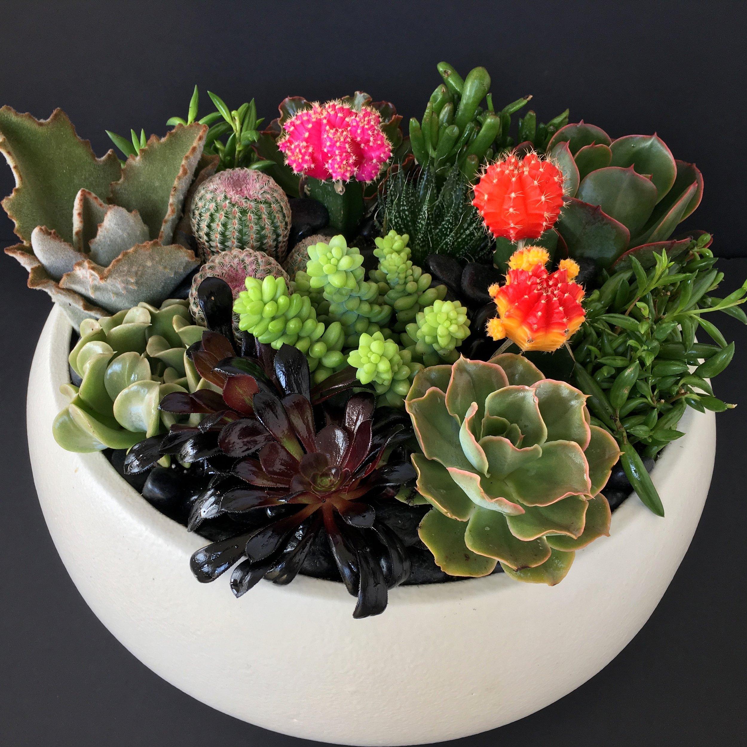 Succulent Garden Dish