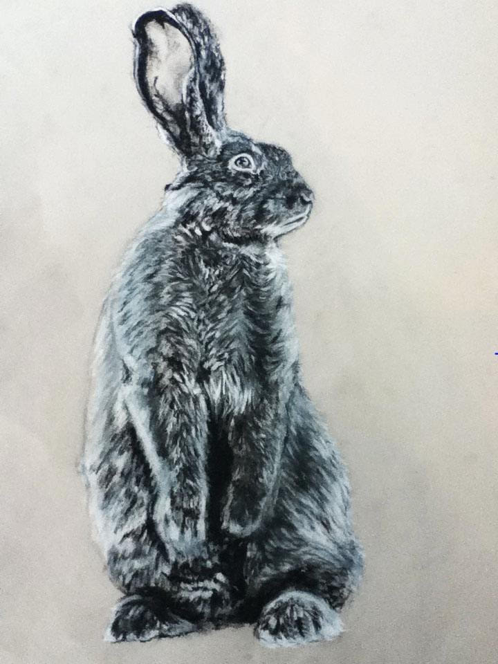 """""""Hare in Charcoal""""//Charcoal"""