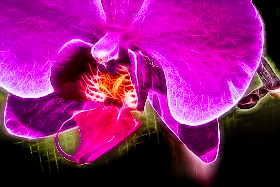 ORCHID-007