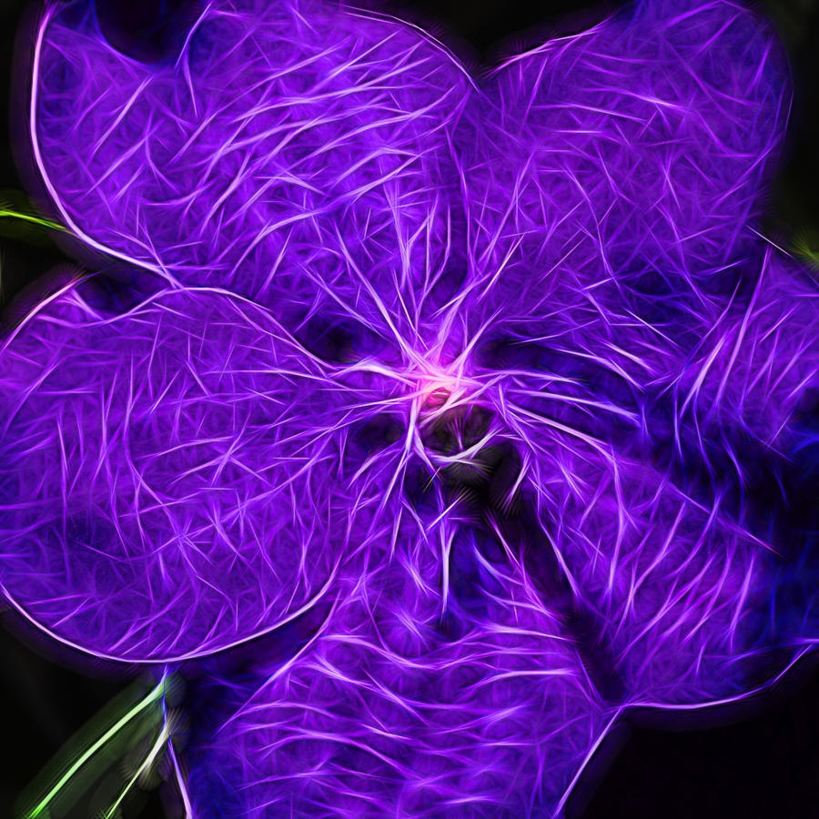 ORCHID-004