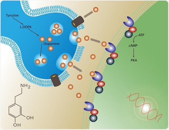 Dopamine -Inflamm Image.jpg