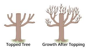 tree topping.jpg