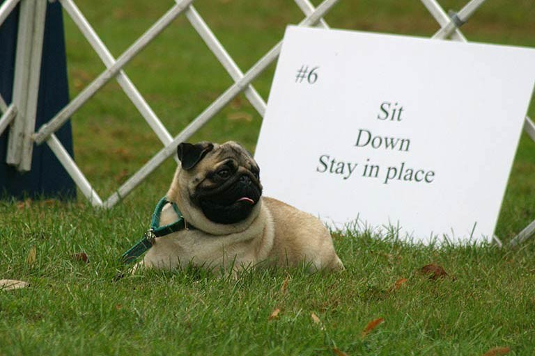SIt Down Stay in Place! .jpg