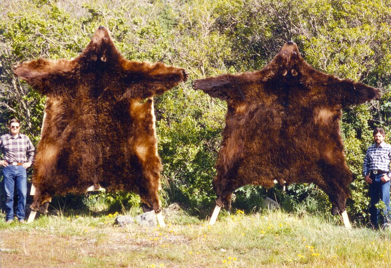 Brent and me with our first two clients Brown Bears.