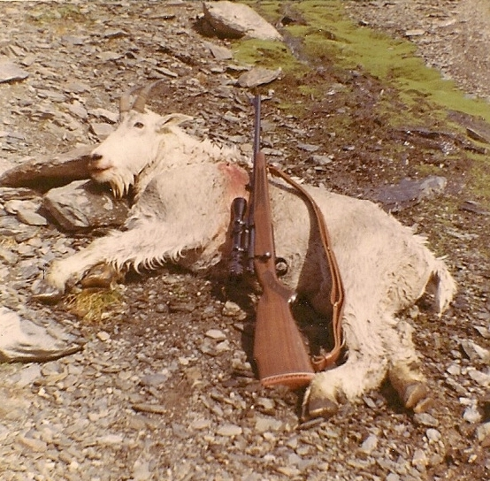 My 1st mountain goat with my Winchester Model 70 300 Winchester magnum.