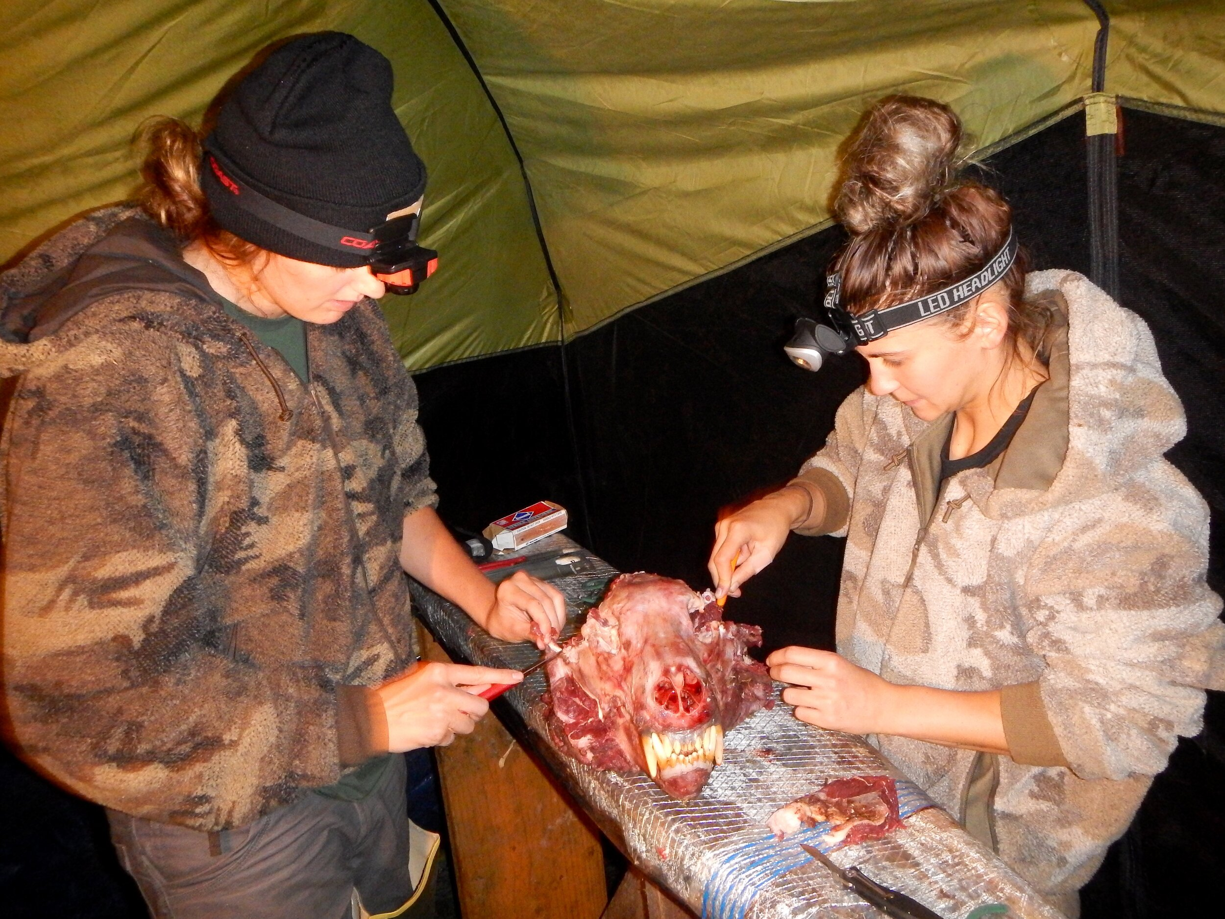 Rachel and Hadley cleaning the meat off the skull. Anyone for bear head stew?