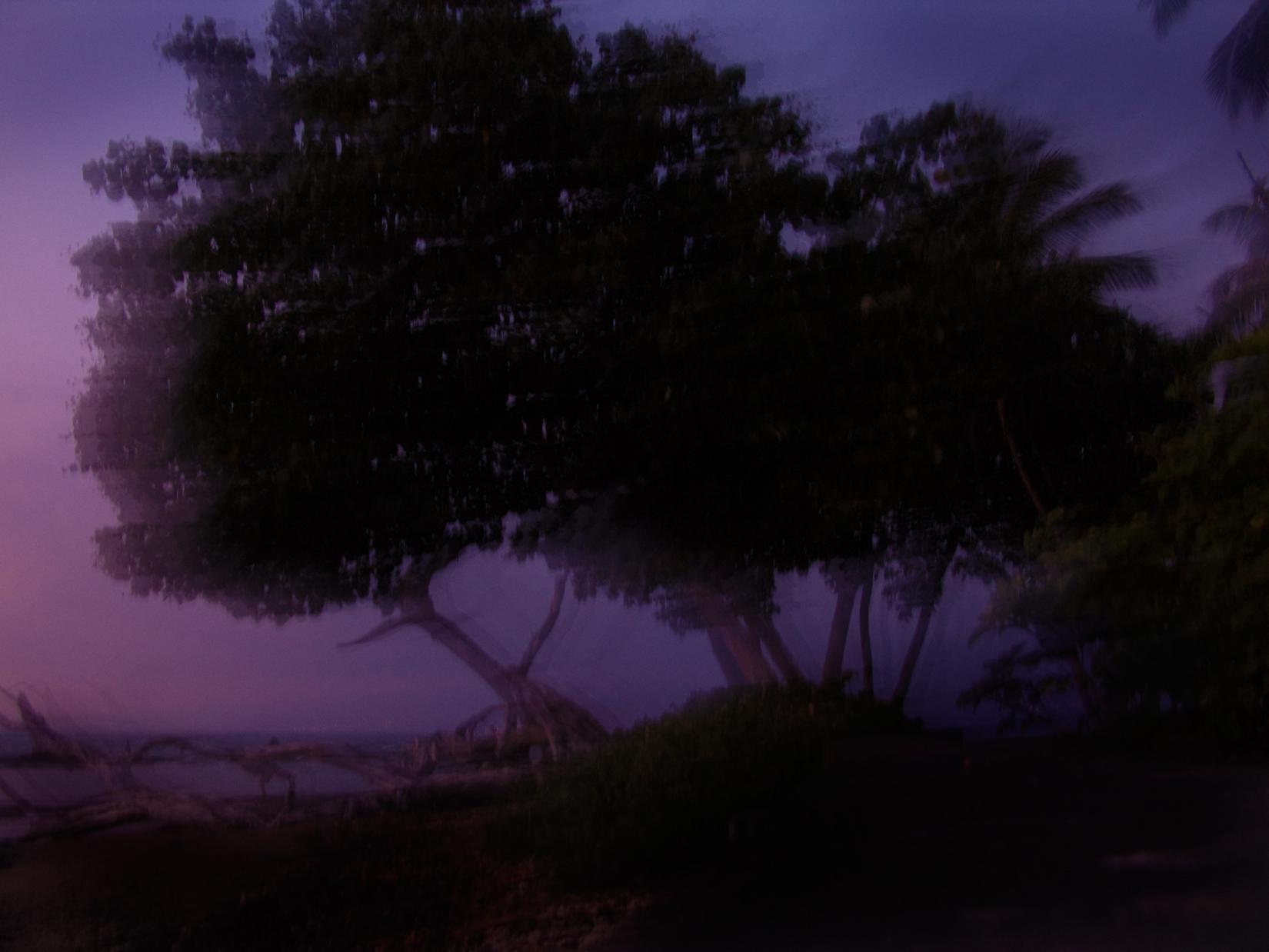 evening tree.jpg