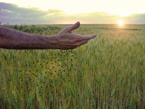 sowing-seed-1.jpg