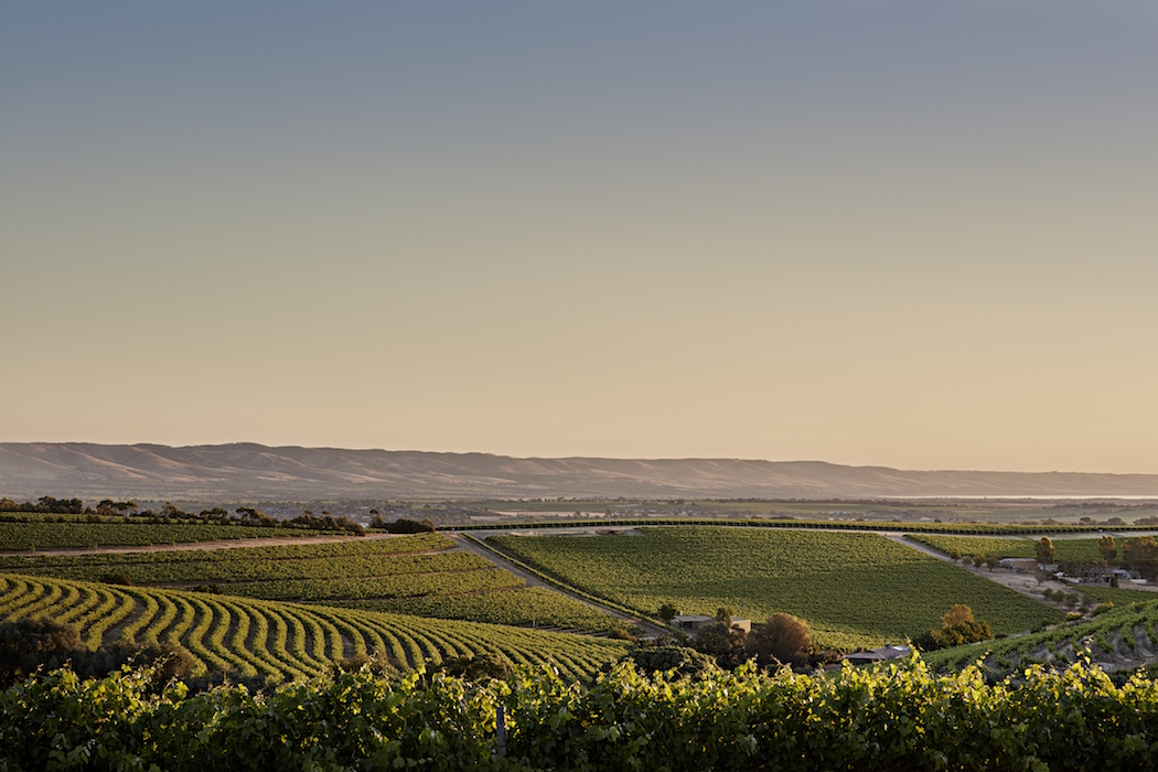 McLaren Vale vineyard sunset copy.jpg