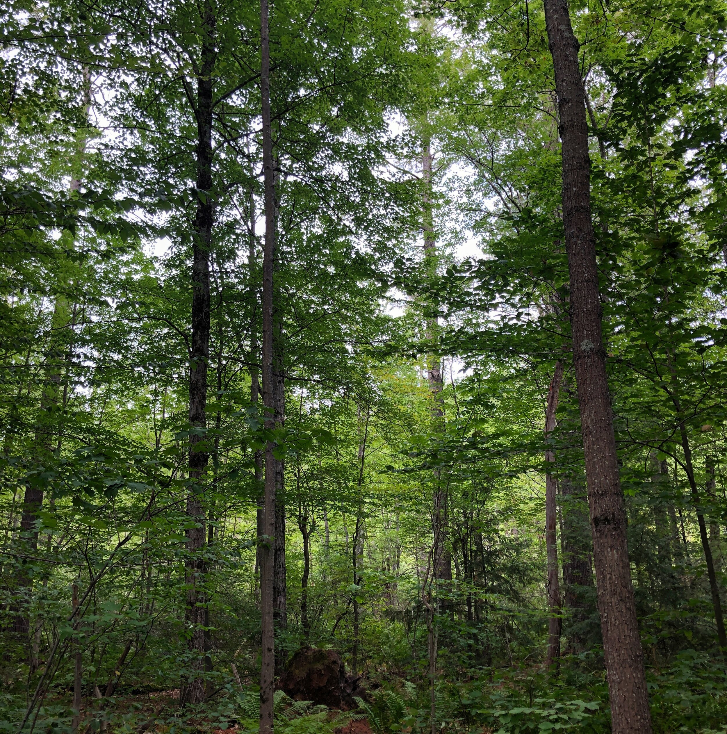 "Via Scott K Smith, Hancock, NH: TempleFest 2019 ""Forest"""