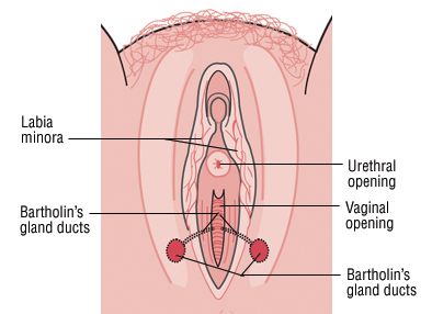 The glands are beneath the surface of your skin and are not visible unless they become swollen.