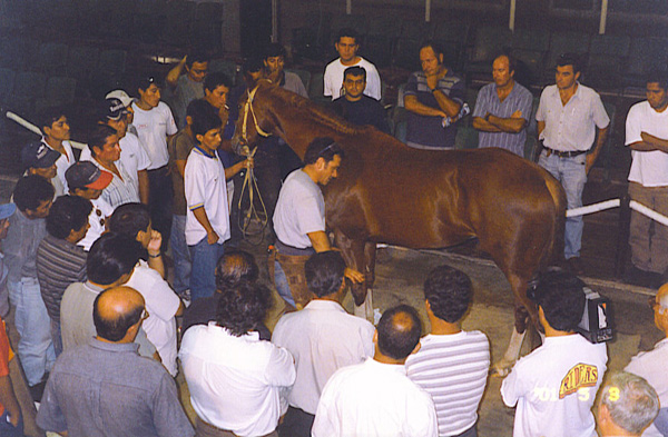 Giving a seminar to Farriers, Veterinarians and trainers.