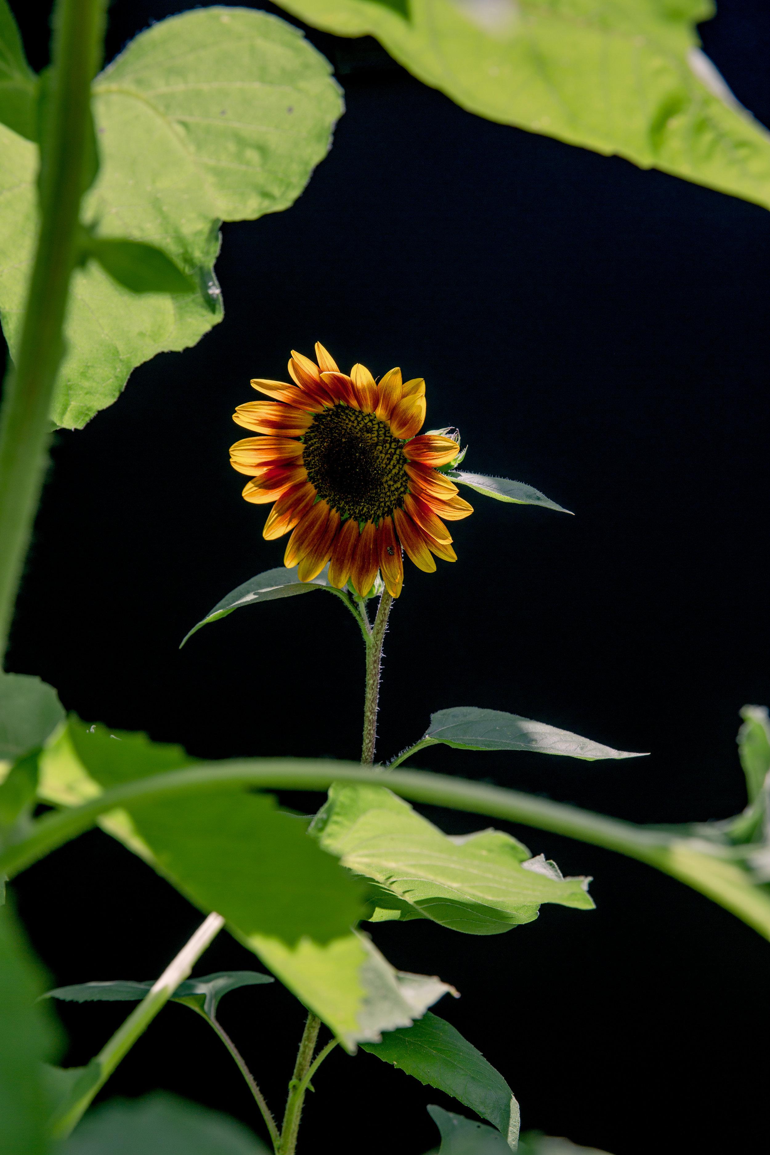 FlowersOnBlack-9.jpg