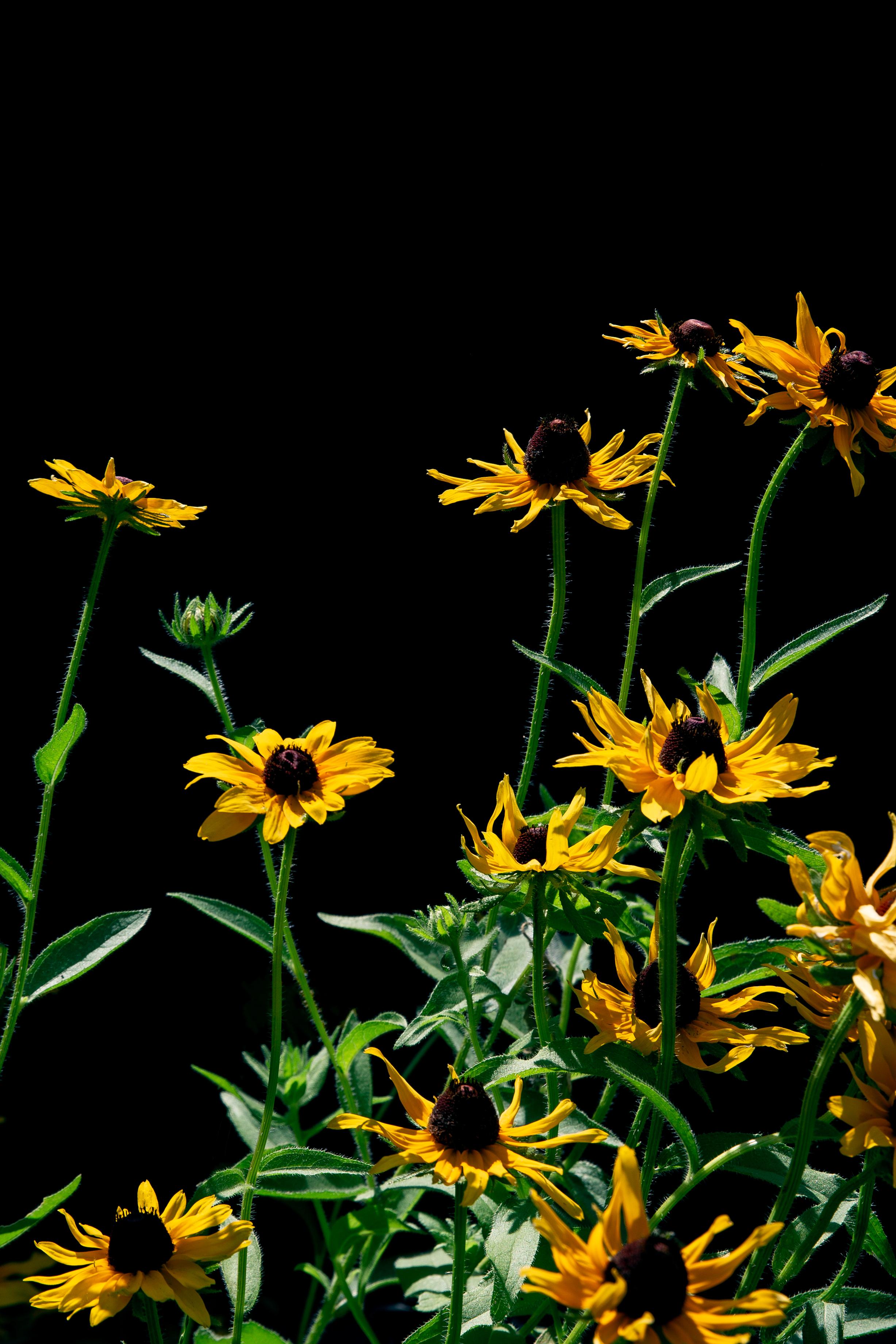 FlowersOnBlack-8.jpg