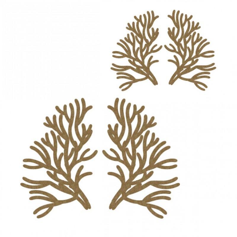 coral image.jpg