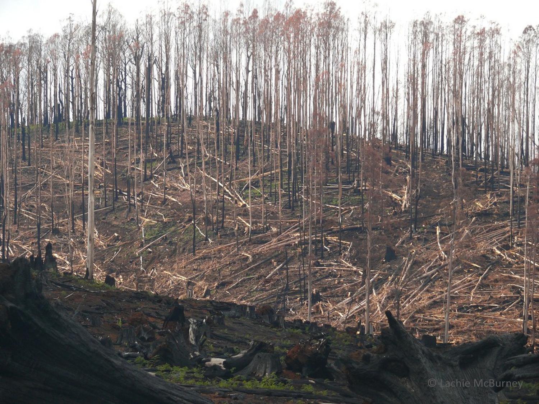 salvage logging2 watermarked.png