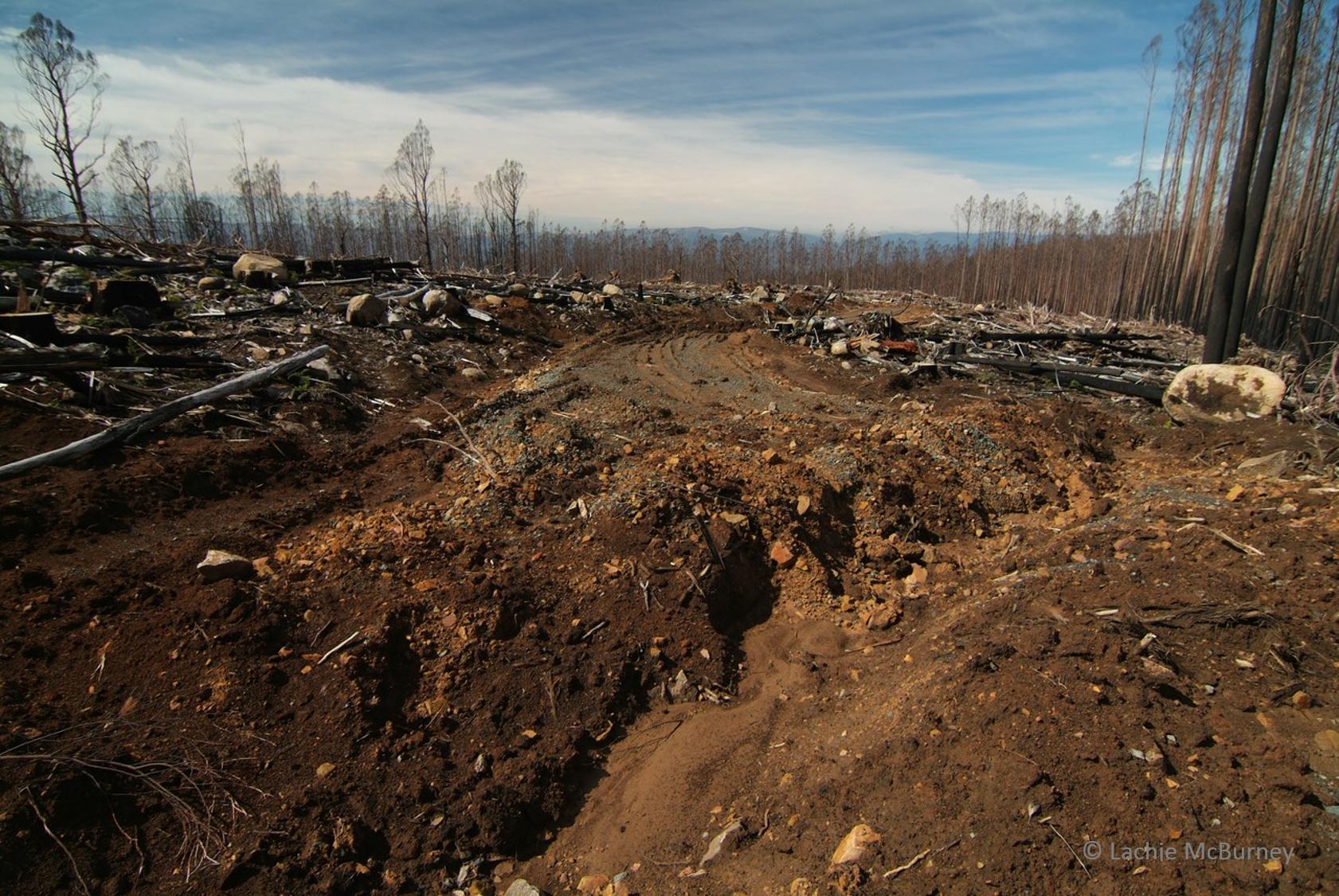 salvage logging3 watermarked.png