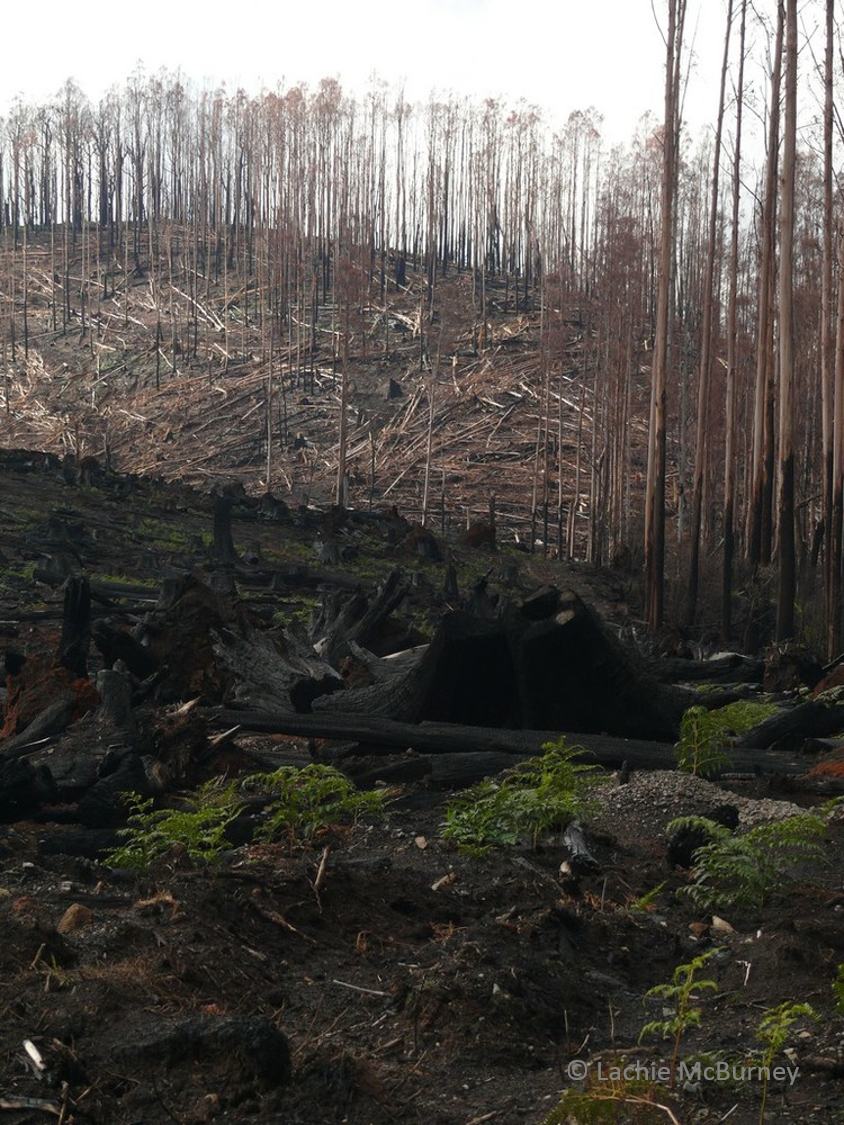 salvage logging4 watermarked.png