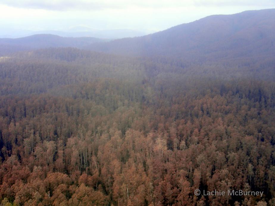 salvage logging5 watermarked.png