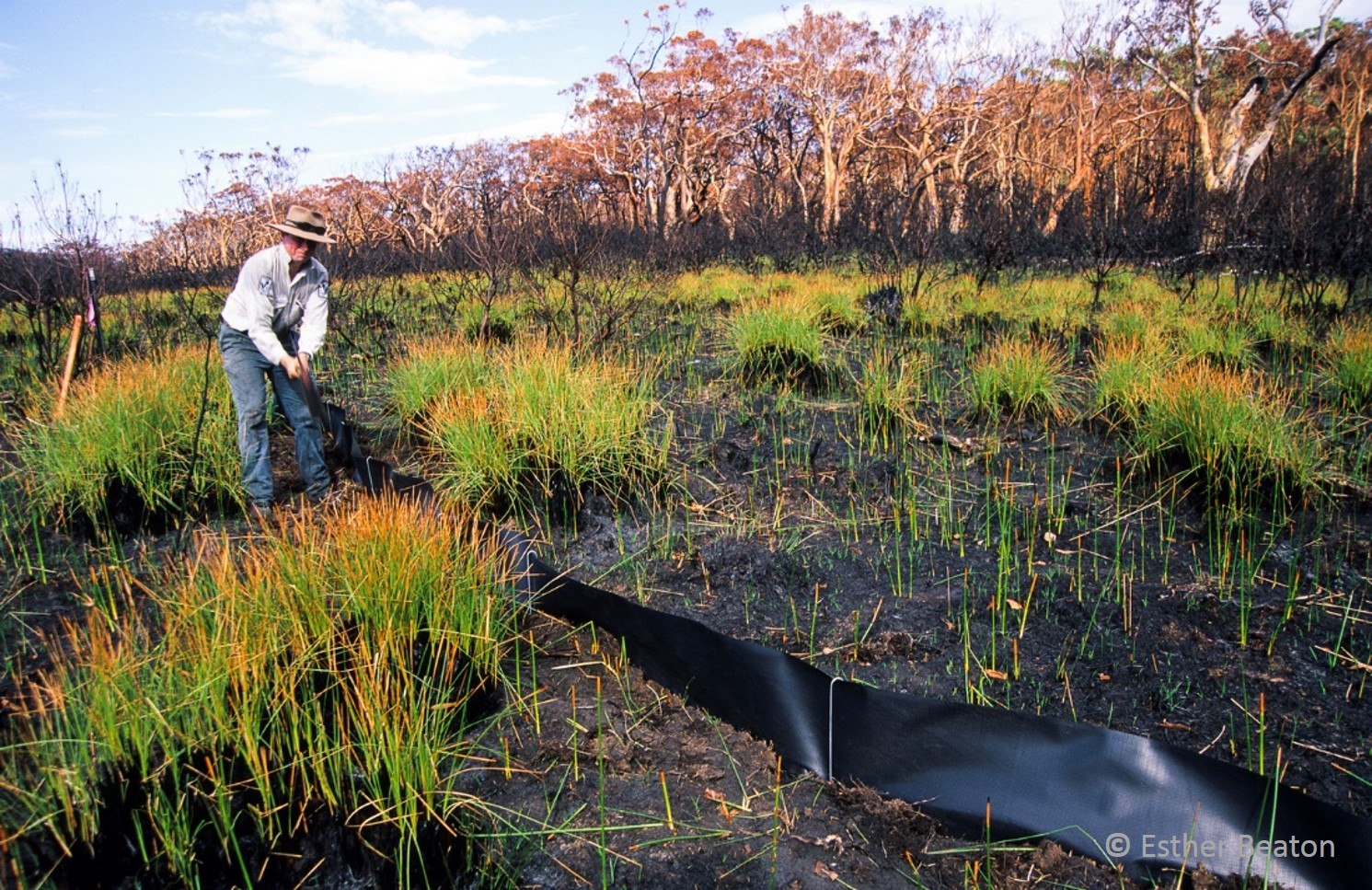 Chris sets up a drift fence following a major wildfire at Booderee in 2003. Photo credit: Esther Beaton.