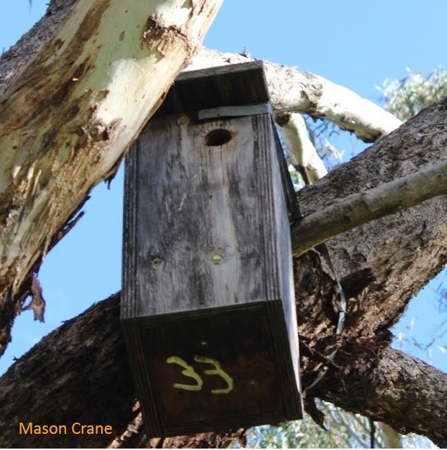 A typical nestbox (often used by Phascogales elsewhere) and the type of boxes the positive hair samples were collected from in the South West Slopes.