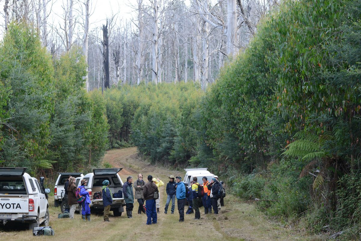 For over thirty years, Australian National University researchers have undertaken stagwatching for Leadbeater's Possum and other fauna at 175 permanent monitoring sites. Following the Black Saturday fires, Leadbeater's Possum had not been recorded on any site which was burnt, until now.