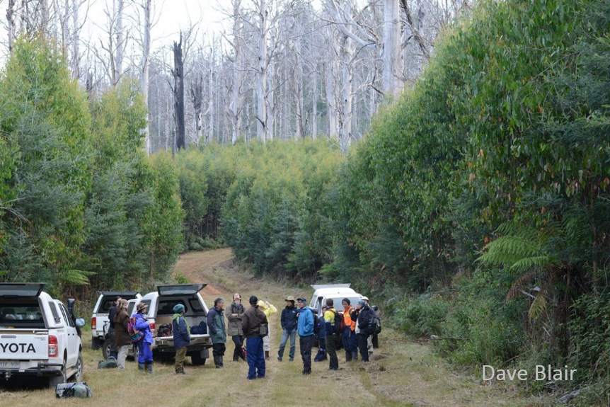 David Lindenmayer  and researchers from The Australian National University have studied the  Victorian Central Highlands  and Leadbeater's Possum since 1983.