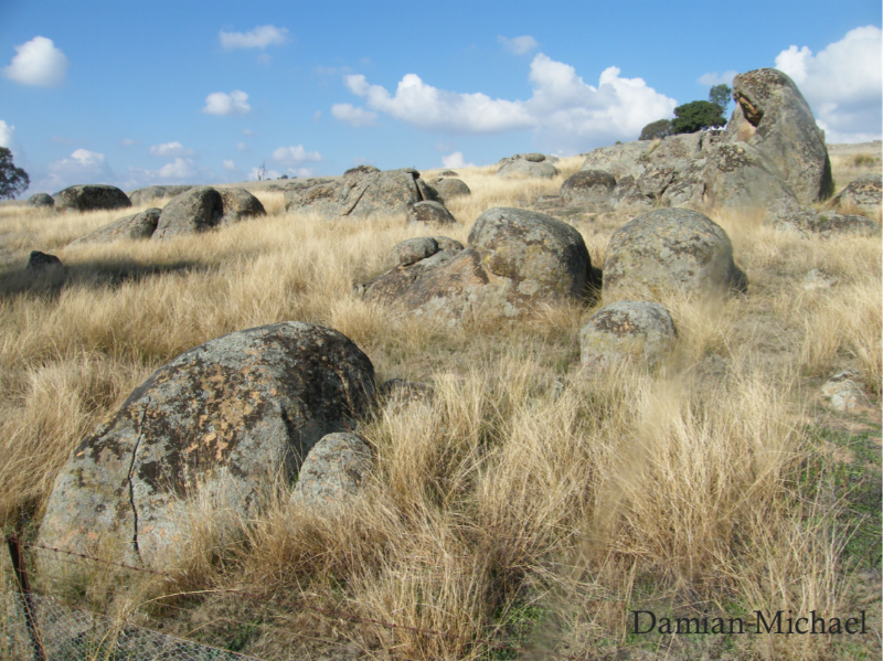 Bush rock and rocky outcrops are vital, non-renewable resources for reptiles on the farm. In the Box Gum Grassy Woodlands, seven species are particularlyassociated with these habitats. Photo: Damian Michael.