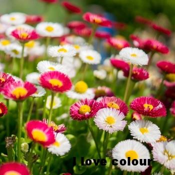 flowers-garden-colorful-colourful-medium.jpg