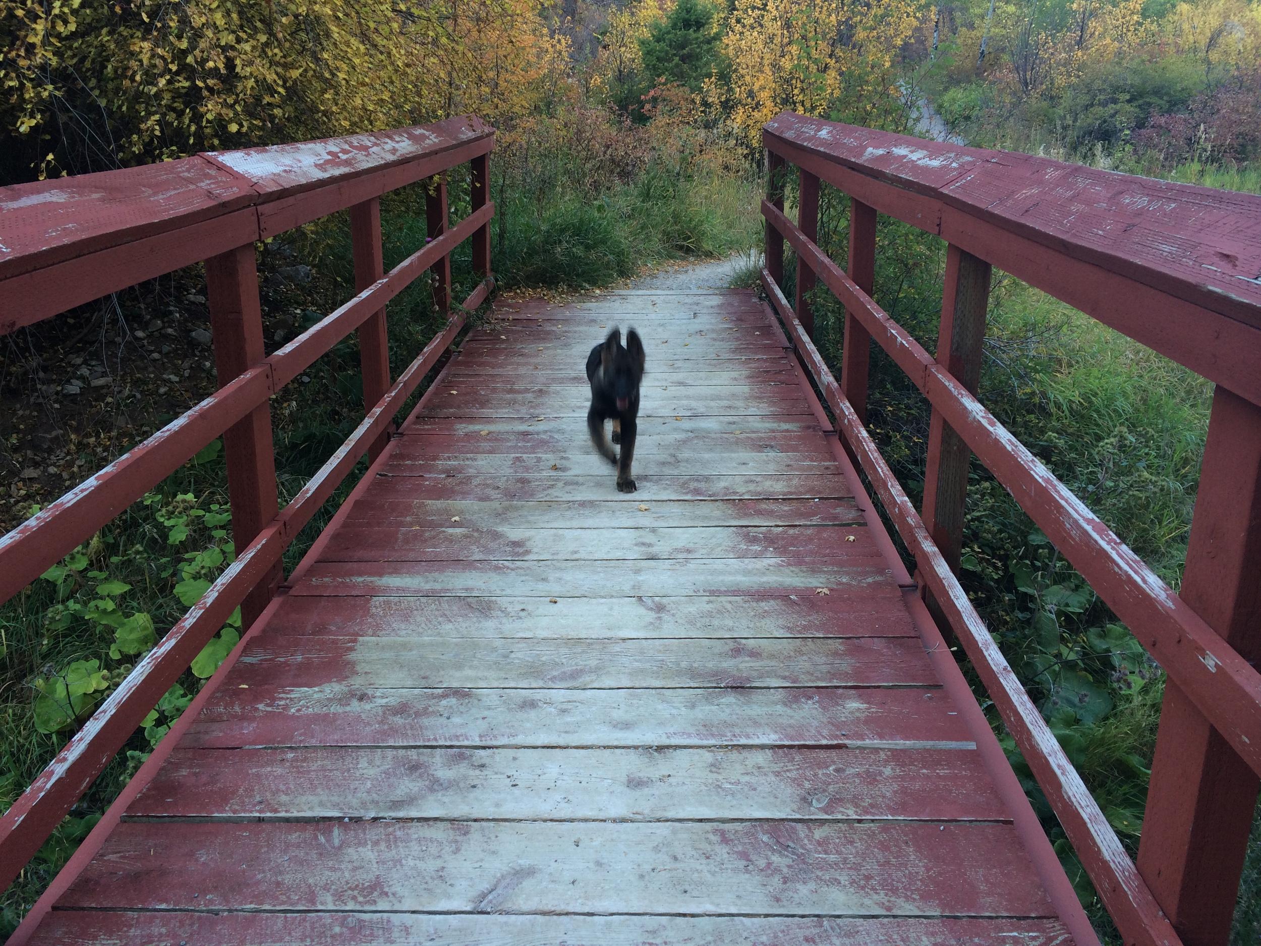 Baby Iorek, Vigilante Pass, Helena, MT