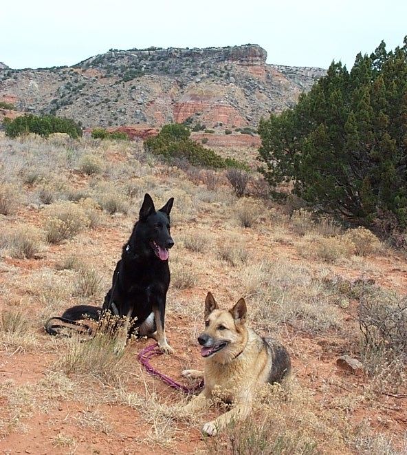 Miel and Aero, Palo Duro Canyon, TX