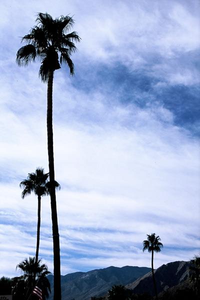 13_f1010032-palm-springs-palms-n-that-pjm-goon.jpg