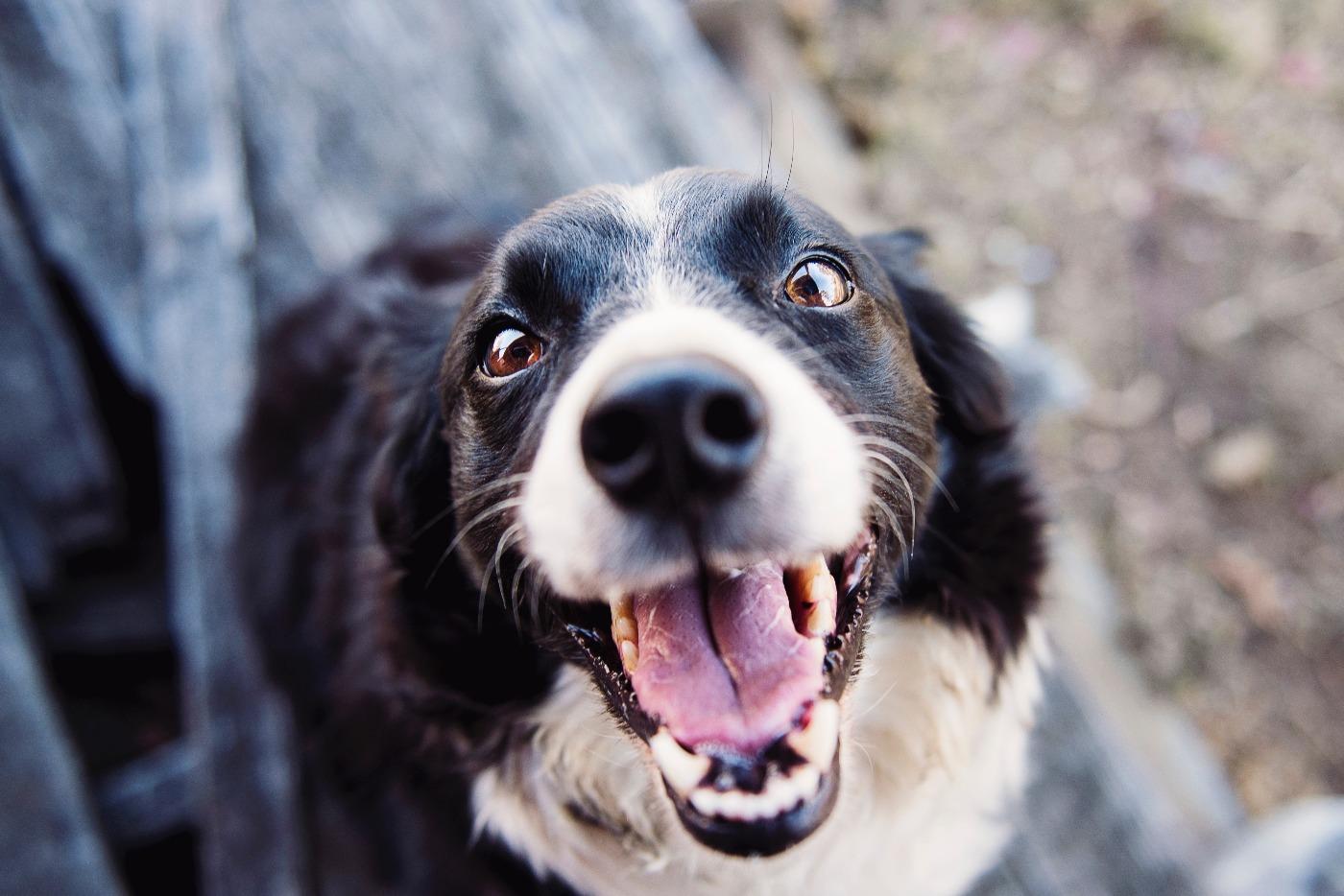 animal-blur-canine-551628 (1).jpg