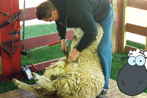 Don't be sheepish about building a program around your community's strengths. Photo courtesy of Chester County Parks