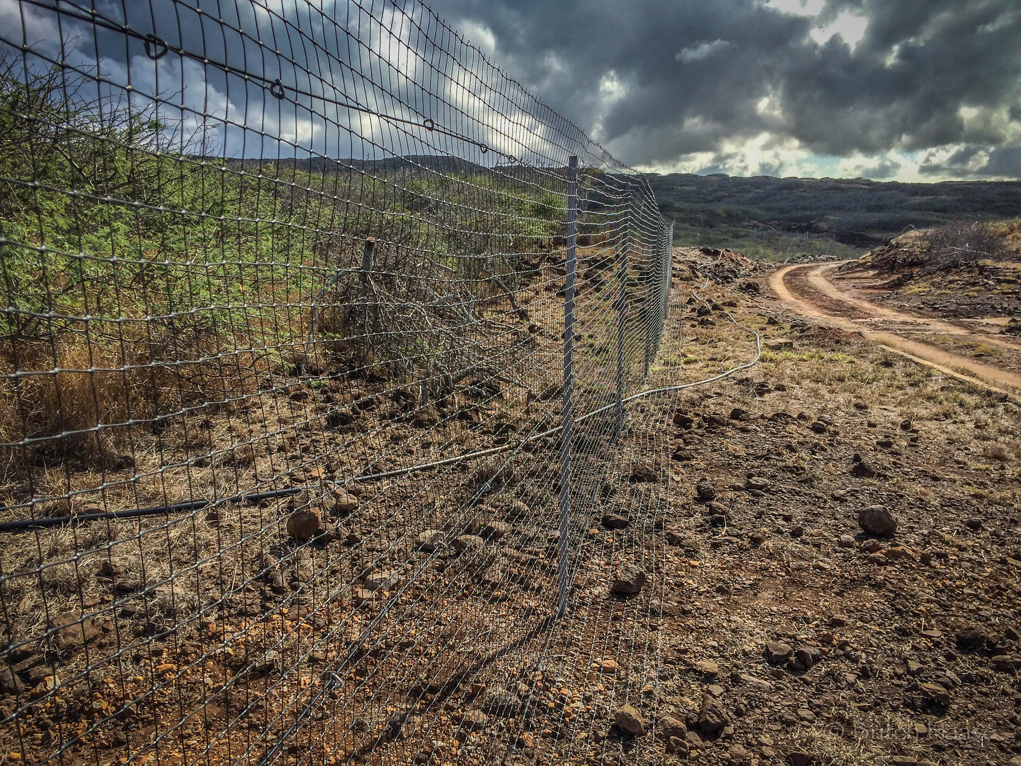 Butch Hawaii Deer Fence Photo.jpg
