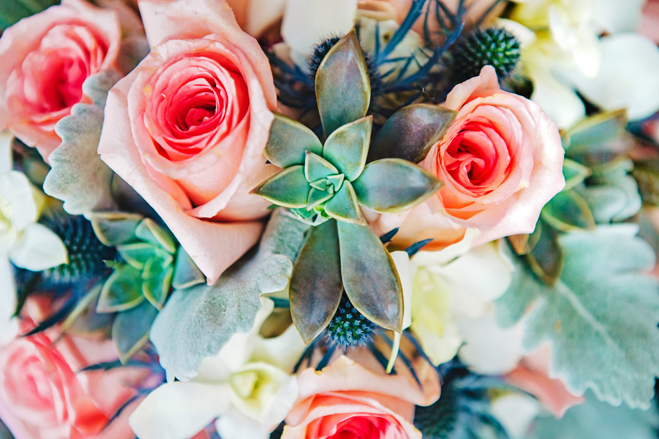 Pink & mint bridal bouquet featuring blue thistles, echeveria succulents, dusty miller, white orchids and pink roses.